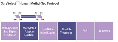 SureSelect Methyl-SeqXT