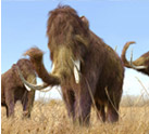 Return of the Woolly Mammoth